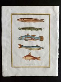 Pelham 1820 Hand Col Print. Fish of the Nile after Sonnini